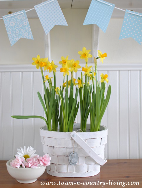 Daffodils-in-Basket