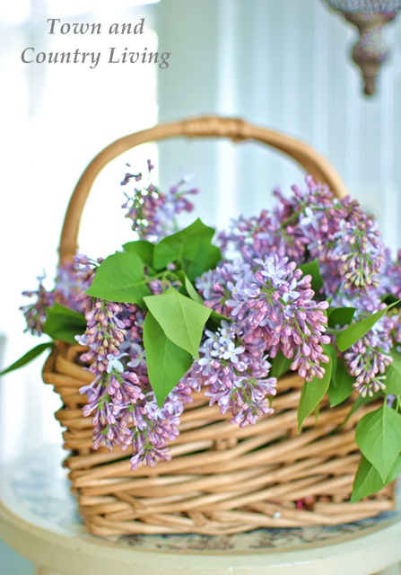 Lilacs-in-a-Basket