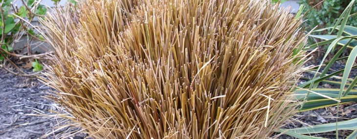 springtime gardening pruning ornamental grasses  live creatively, Natural flower