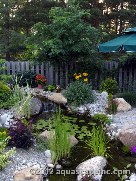 Backyard Pond with Aquatic Plants