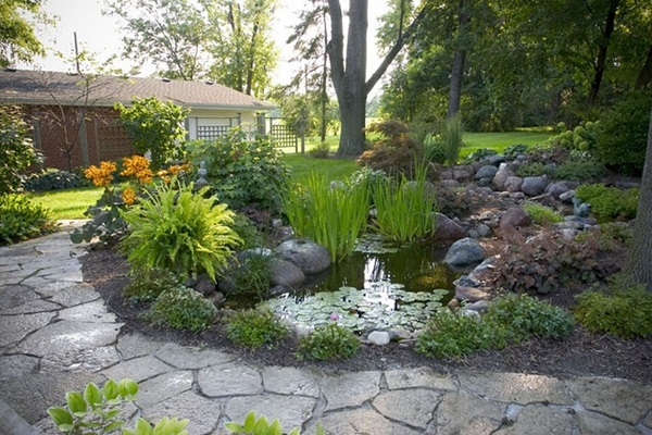 Small Ecosystem Pond with Fish and Plants