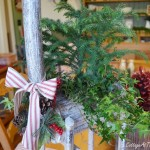 Last Minute Gift-A Living Tree